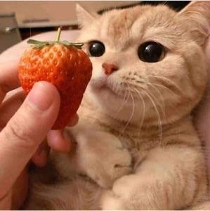 Strawberryboi